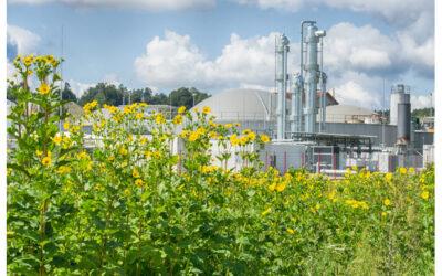 Aus der Praxis: biohybrid-Speicheranlage macht erneuerbare Energie flexibler